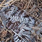 Frost on Bracken by Sue Robinson