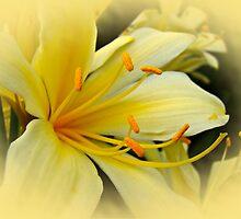 Softly Like Sunshine by MotherNature