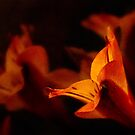 Lily in autumn colors by Celeste Mookherjee