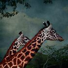 *2 Giraffes by GoldenRectangle
