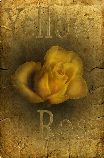 Yellow Rose by Nicole W.