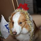 Brown and White Border Collie Ready For Christmas by Eoin Noble