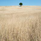 """Tree of Life"" ∞ Killarney, QLD - Australia by Jason Asher"