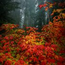 Some Liget, Some Color by Charles & Patricia   Harkins ~ Picture Oregon