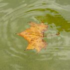 Leaf by K. Abraham