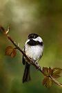 Autumn Chickadee Painting by Renee Dawson