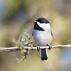 Cedar Rose Chickadee Art by Renee Dawson