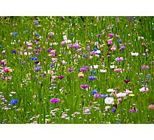 Field Of Flowers Photographic Print