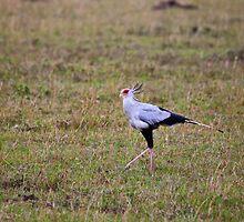 Secretary Bird on the Masai Mara by Sue Robinson