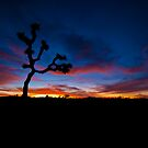 Joshua Tree by spikeehair