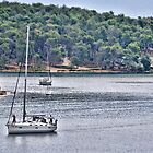Sailing Back To Harbour by lynn carter