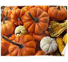Pumpkins & Gourds. Poster