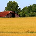 Golden Wheat Field by CcoatesPhotos