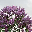 Purple test by Jimmy Deas