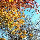 The Colors of Fall by lindsycarranza