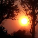 Apricot Dawn... by debsphotos