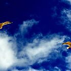 Seagulls on a summers day by melek0197