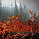 How About That by Charles & Patricia   Harkins ~ Picture Oregon