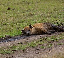 Spotted Hyena relaxing by Sue Robinson