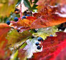 Pleasant Rainy Day by Brenda Dahl