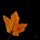Autumn Light 4 by M. J. Cuthbertson