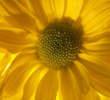 Floral joyful feelings and love. by © Andrzej Goszcz,M.D. Ph.D