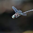 Dragonfly Hover by VWSWAG
