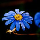 Blue drop flower by Alastair Creswell