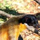 Yellow-Throated Marten by Larry Trupp
