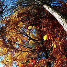 Oxford, MI   Autumn 6 by RJtheCunning