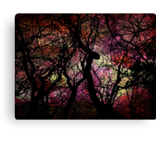 Forest Rainbow Canvas Print