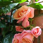 Roses Sleeping in the Sunshine by kathrynsgallery