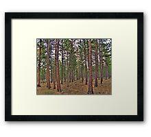 ponderosa trail Framed Print