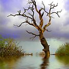 OLD TREE in WATER by Norfolkimages