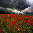 STORM BREWING OVER POPPY FIELD by Norfolkimages