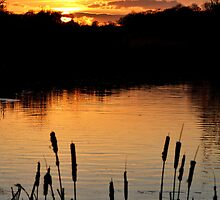 Clumber Park Sunset  by skid