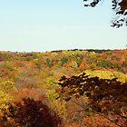 Tinker's Creek Gorge by Linda Gleisser