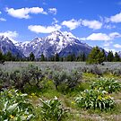 Mount Moran Wildflowers - Grand Teton National Park, Wyoming by Brian Harig