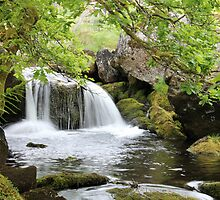 Dartmoor Waterfall by mwrey