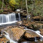 Ricketts Glen I by Andrew Taylor