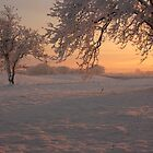 Frozen Sunrise by Adrian McGlynn