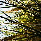 Landscape No.2 by PE Preston