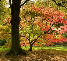 Vivid Autumn III by Chris Tarling