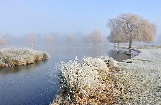 Winter in Bushy Park by Kasia Nowak
