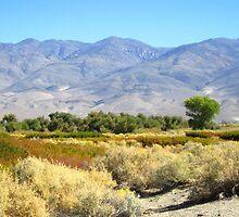 Desert meets Mountains by marilyn diaz