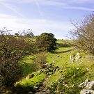 Rocky Terrain in Lathkill Dale  by Rod Johnson