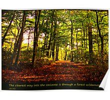 Forest wilderness Poster