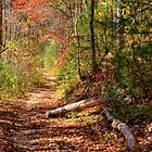 Woodland Path by Joe Saladino