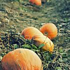 Pumpkins death row by Pierre-Etienne Vachon