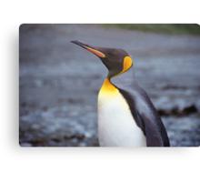 King Penguin Portrait Canvas Print